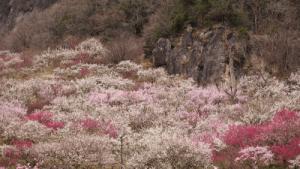 本小松石墓石 2017020706