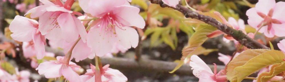 本小松石洋型墓石 2017040402