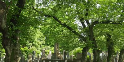谷中霊園 墓石 本小松石