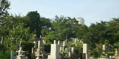 青山霊園 墓石 本小松石
